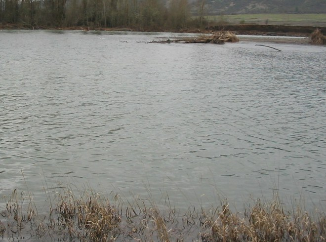 Flooded section of the upper Rogue River