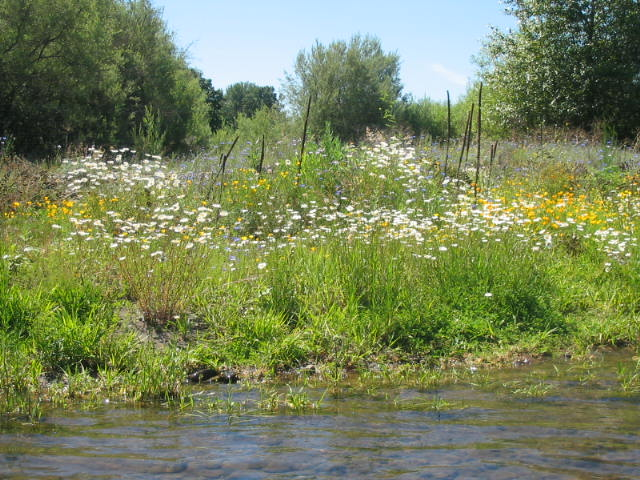 Wildflowers growing along the banks of the Rogue River