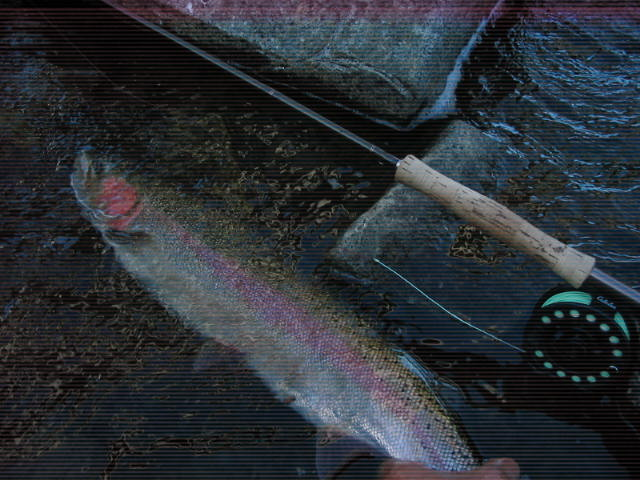 Large buck Rogue steelhead plucked from the fast water.