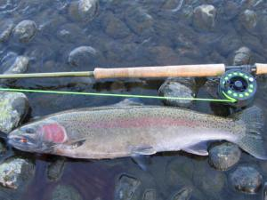 Rogue River Steelhead