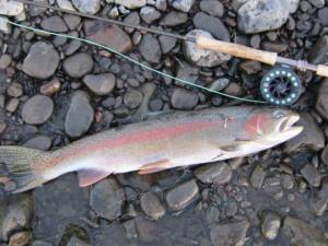 This February Rogue River fish came to the orange beadhead Brownbagger.