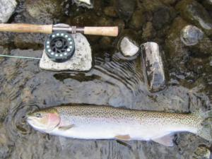 Applegate Steelhead