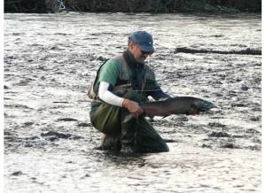 Late November silver salmon buck caught on the Rogue River, Oregon.