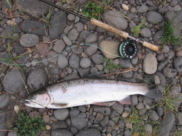 September Rogue Steelhead