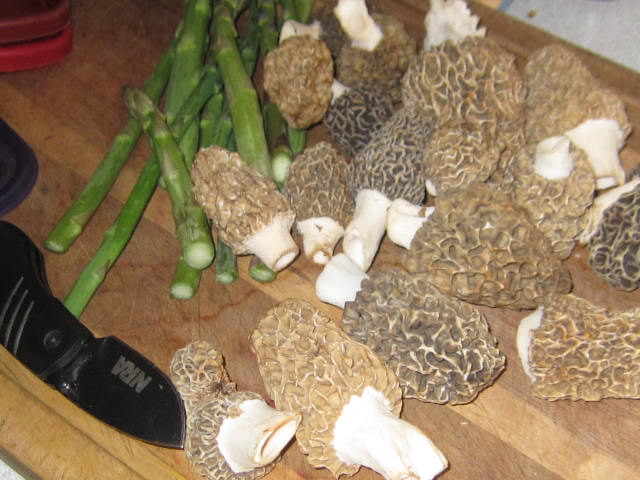 April Morels and Asparagus