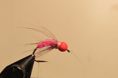 The Selbicky Sowbelly fly. This fly is hot for mountain trout right now. A sowbug imitation? Or red rock worm?